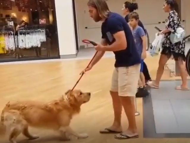 Если пес боится ездить на эскалаторе