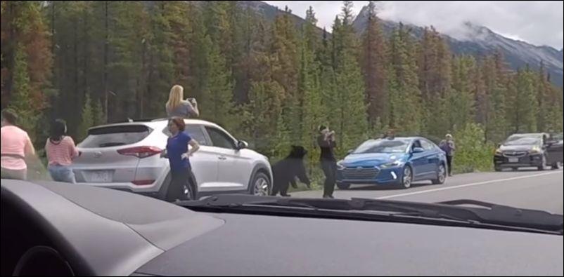 В Канаде туристы вышли пофотографировать медведя, который чуть на них не напал