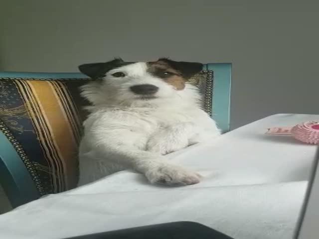 Пес, который совершенно точно осознал свою вину