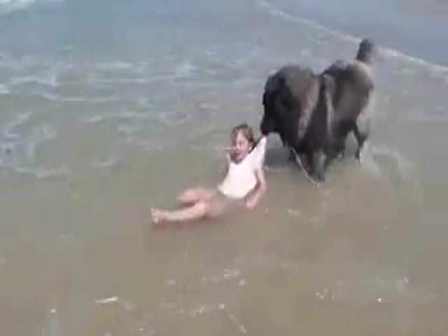 Пес достал из воды ребенка, который, по его мнению, находился в опасности