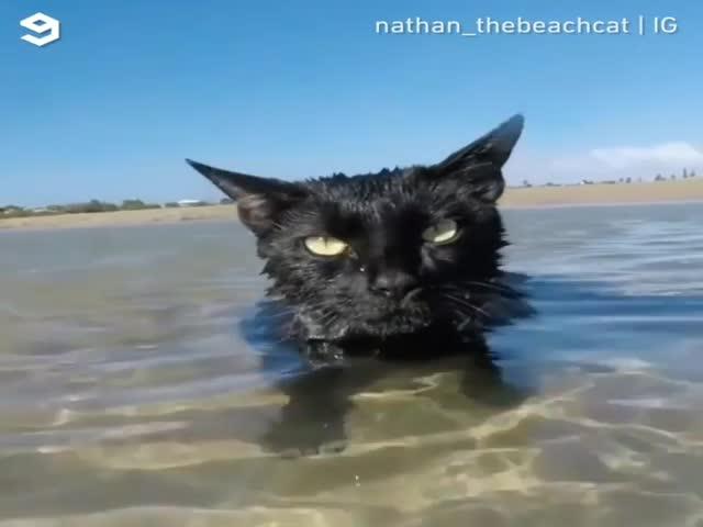 Кот, который любит купаться в море