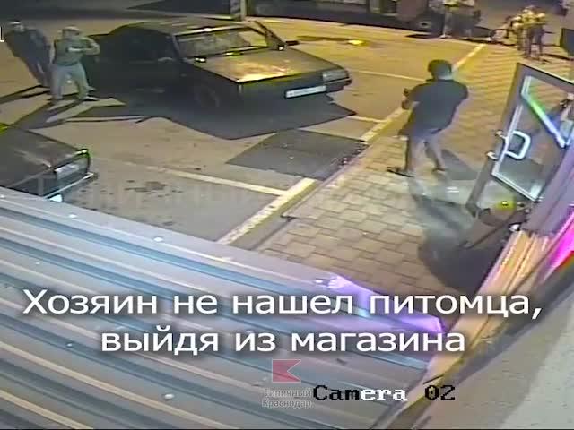 В Краснодарской крае пьяный живодер решил поиздеваться над собакой