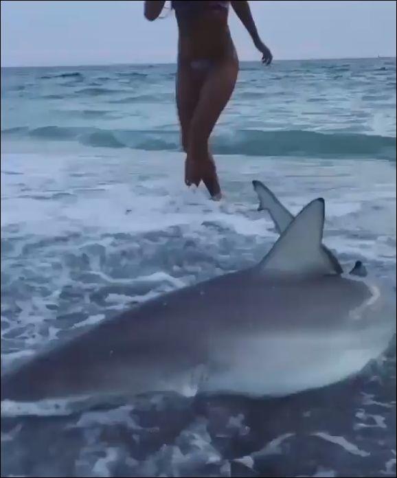 Симпатичная девушка спасает акулу, которую волнами выбросило на берег