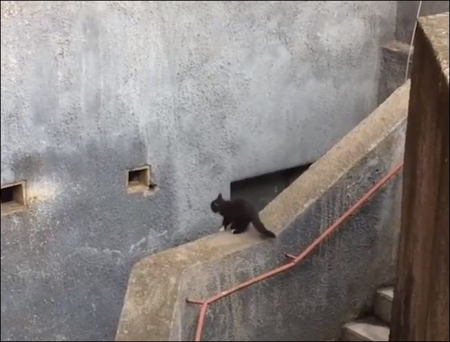 Кот совершает точный прыжок в небольшое отверстие