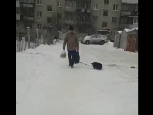 Пес помогает хозяину донести покупки