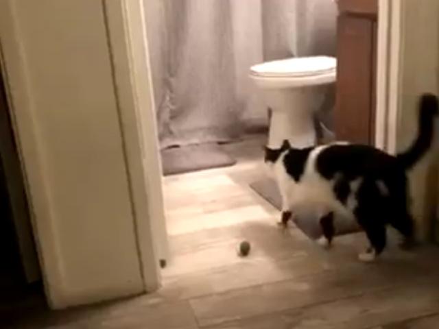 Котик,