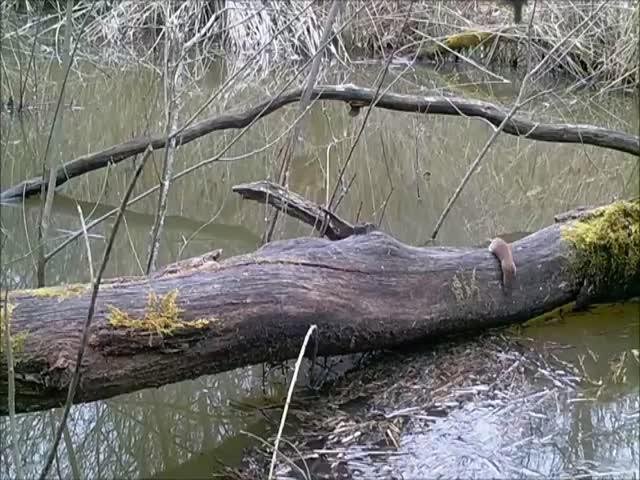 Что происходит возле одного упавшего дерева во французском лесу