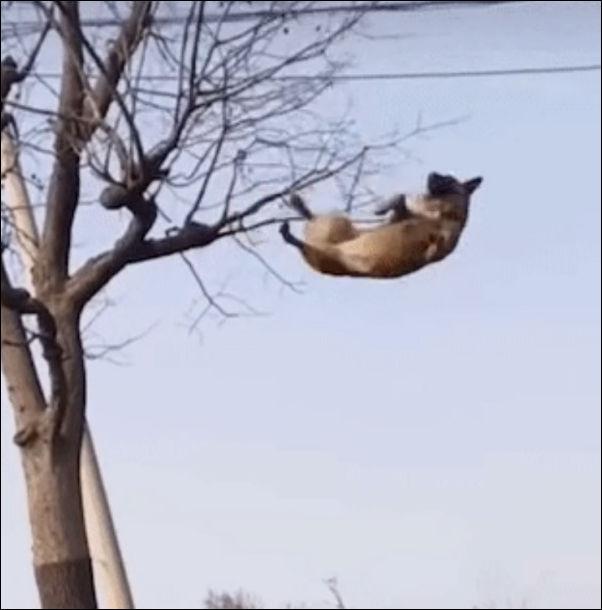 Песель, который научился взлетать