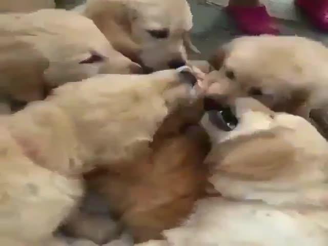 Стая псов против несчастного котика