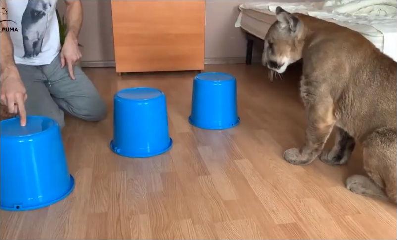 А котик оказался не сильно умным