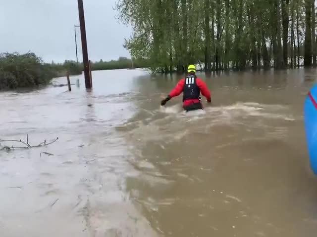 Коту не понравилось, что его решили спасти во время наводнения