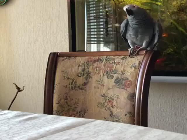 Попугаю