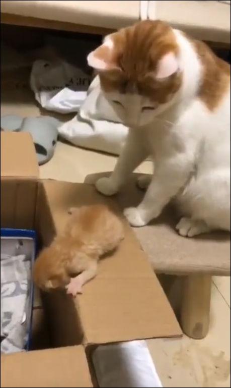 Кот знает толк в воспитании