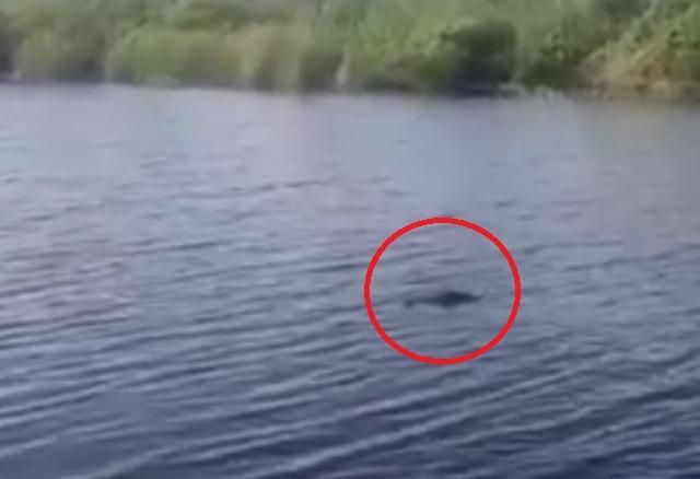 В Астрахани рыбак встретил в воде нетипичную для данных краев зверушку
