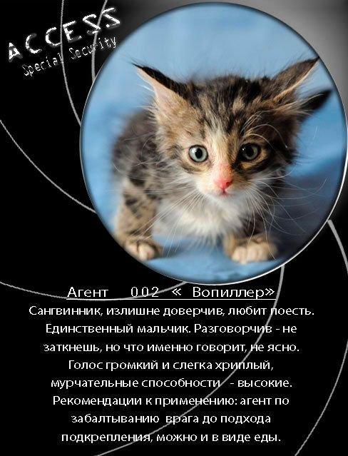 стихи пиар котят самых обаятельных, модных