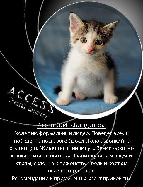 кто стихи пиар котят советую