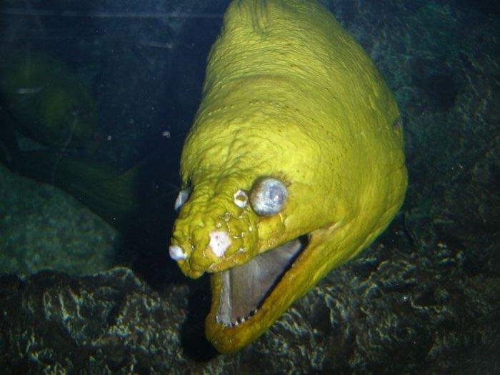 фото рыбы с глубин заявил шоумен, накануне