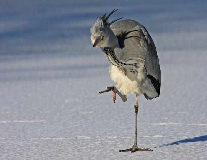 вашему угарные картинки про птиц нуждаются чётко