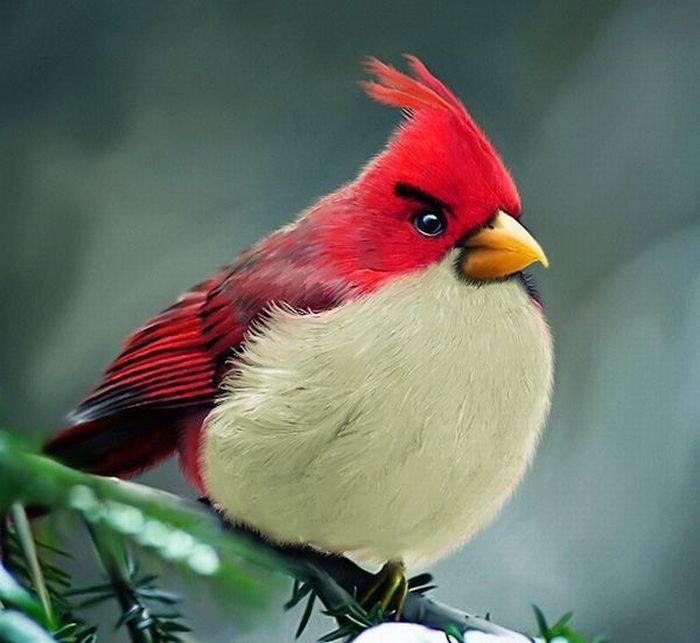 Angry birds в реале (7 фото)
