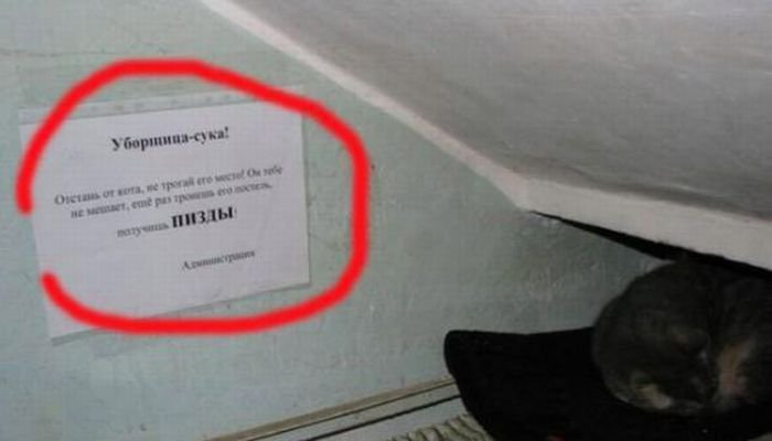 Загонные объявления и надписи (29 фото)