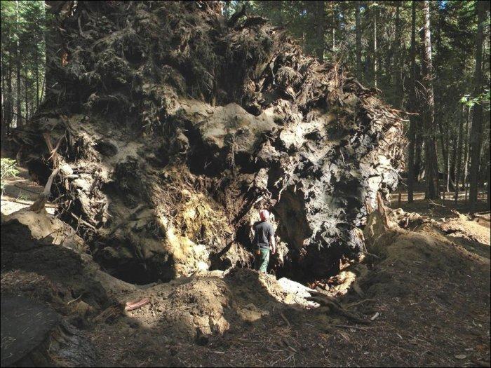 Падение гиганта (3 фото)