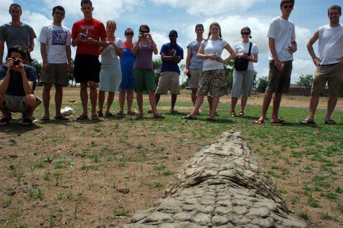 Спокойные крокодилы (19 фото)
