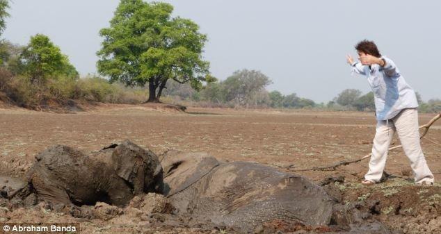 Спасение слонов (17 фото)