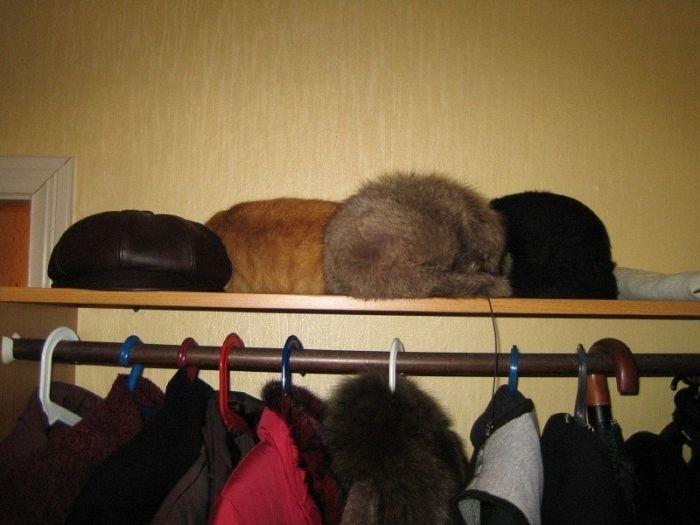 Найди кота (48 фото)