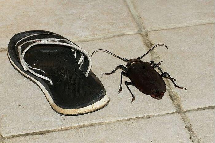 Огромный жук (7 фото)