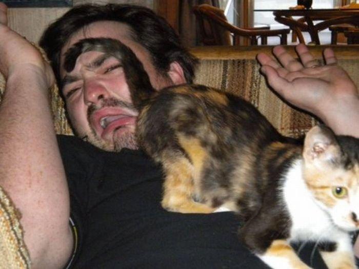 Коты-проказники (67 фото)