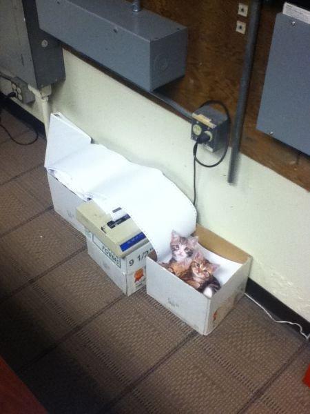 Офисный розыгрыш с котами (9 фото)