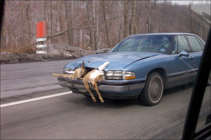 Автомобильные неудачи (105 фото)