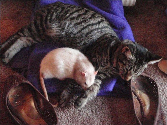 Необычная дружба (4 фото)