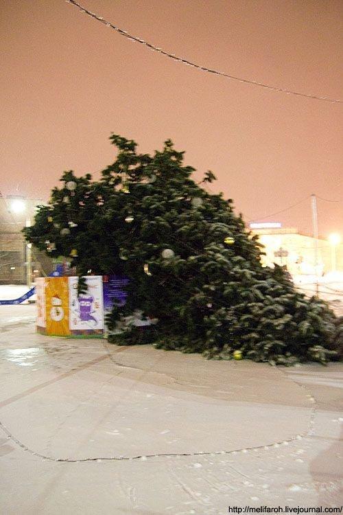 Упавшая елка в Петрозаводске (4 фото)