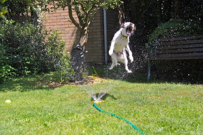 Собаки и поливалки (20 фото)