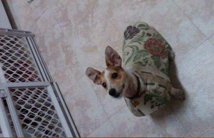 Бездомного щенка приютила семья (15 фото)