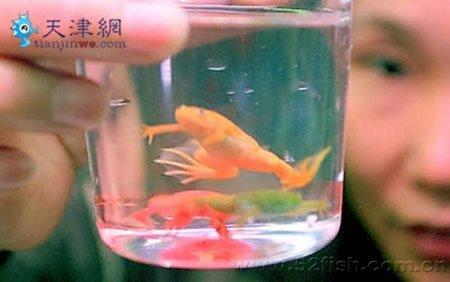 Разноцветные лягушки (3 фото)