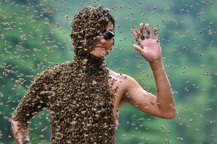 На ком больше пчел (6 фото)