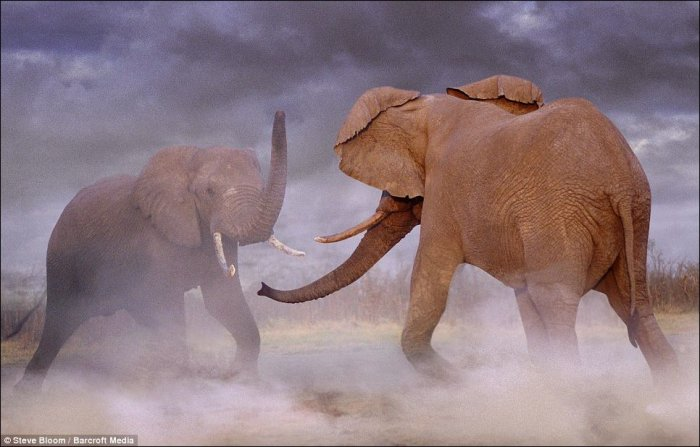Конфликты животных (17 фото)