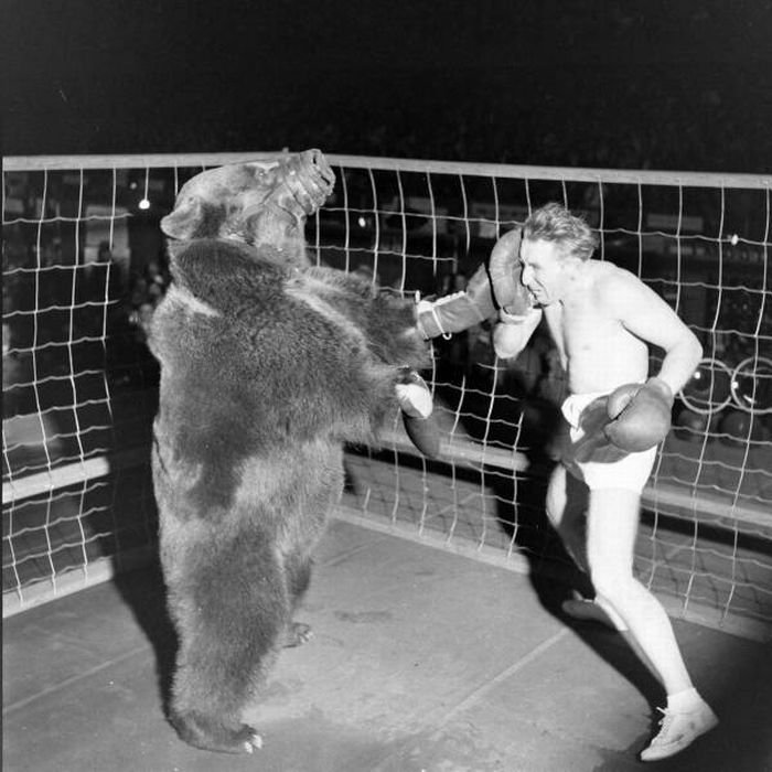 Медведь против человека (6 фото)