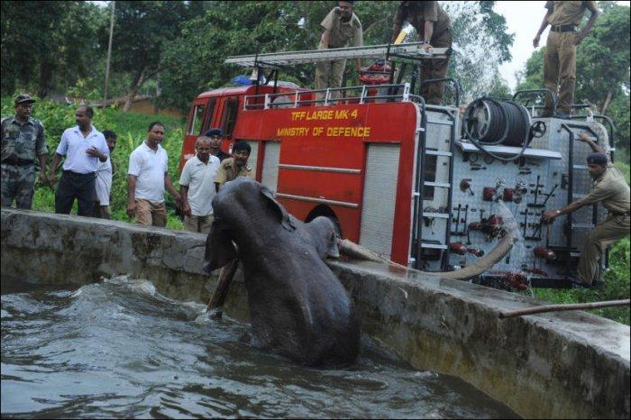 Слоненок упал в бассейн (6 фото)