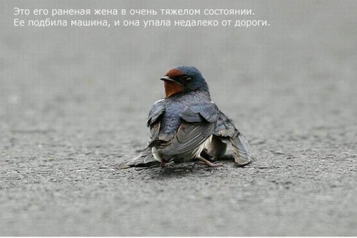 Птичья любовь (6 фото)