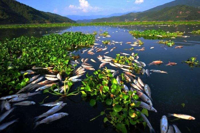 Мор рыбы в Китае (7 фото)