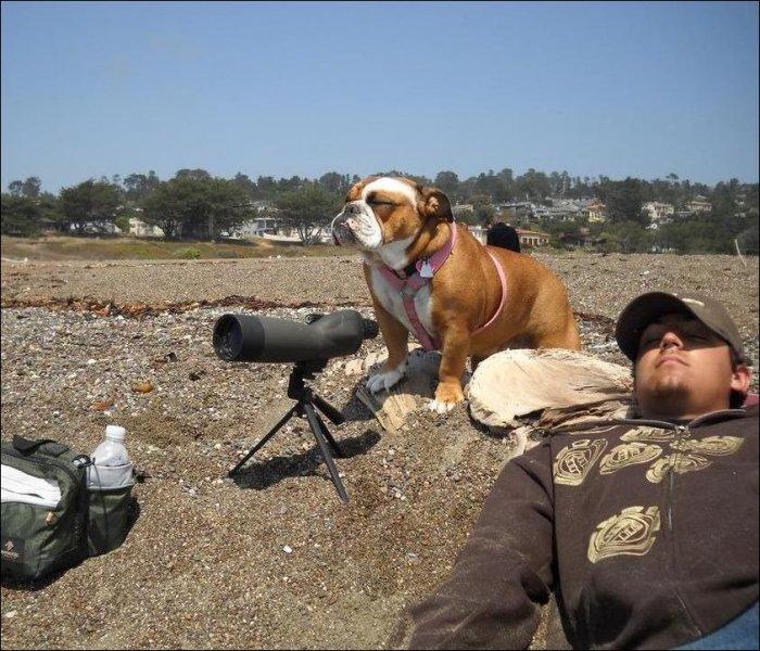Сторожевой пес (2 фото)
