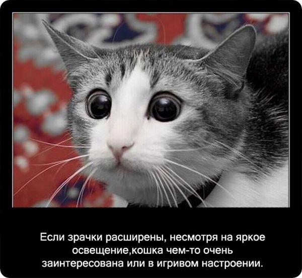 Факты о кошках (90 фото)