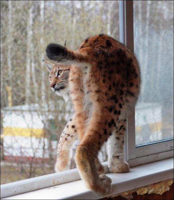 Домашний зоопарк (26 фото)