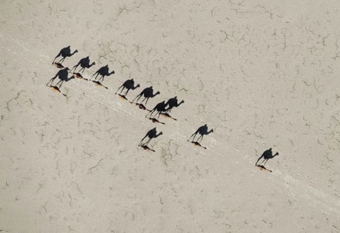 Картинка с верблюдами вид сверху