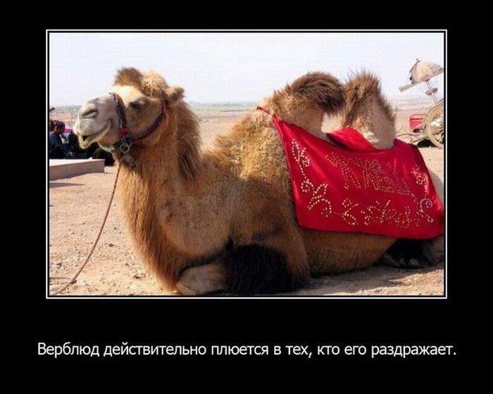 Факты о животных (15 фото)
