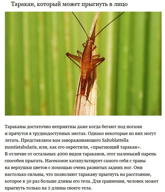 Странные существа, открытые в последнее время (5 фото)