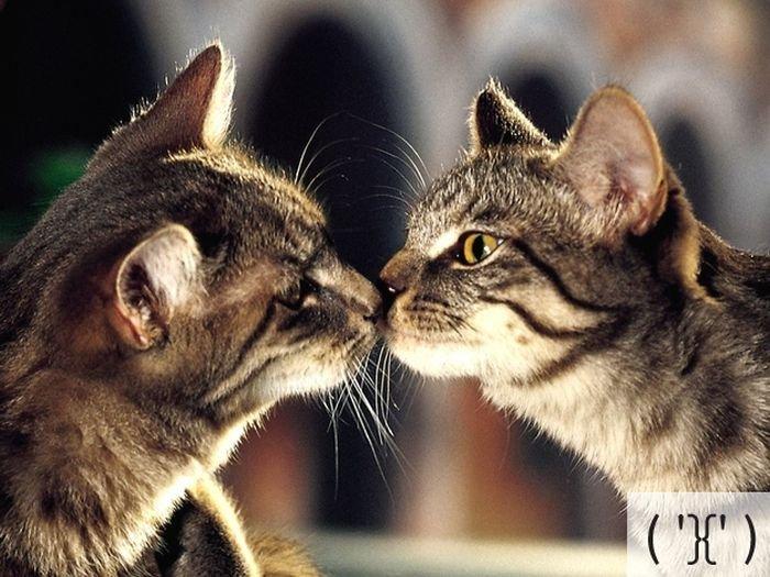 Коты и смайлики (23 фото)